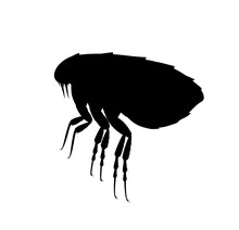 Flea Silhouette. Pest Control Service. Pest Insect And Bug Spray Symbol