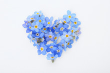 Heart Made Of Amazing Spring Forget-me-not Flowers On White Background, Top View