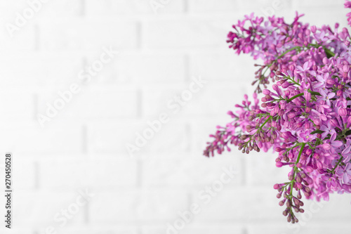 Photo  Blossoming lilac flowers on light background, closeup