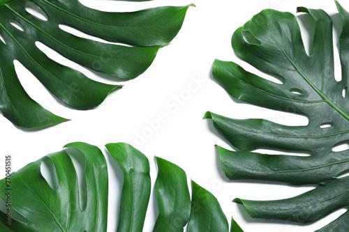 Fototapeta Green fresh monstera leaves on white background, top view. Tropical plant obraz na płótnie