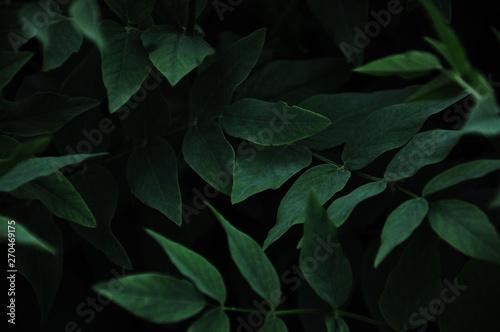 Fotografía  green background colorful background