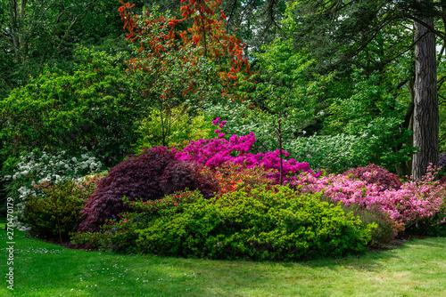 Foto auf Leinwand Schwarz Beautiful Garden with blooming trees during spring time, Wales, UK