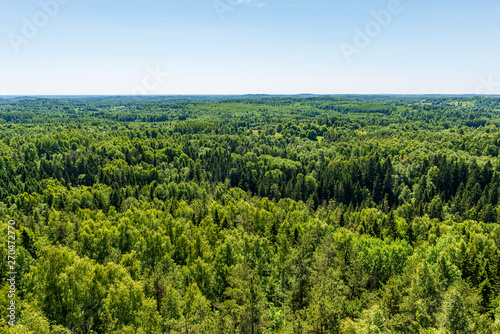 Carta da parati  endless forests in summer dayat countryside from above