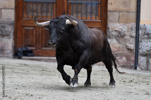 toro con grandes cuernos
