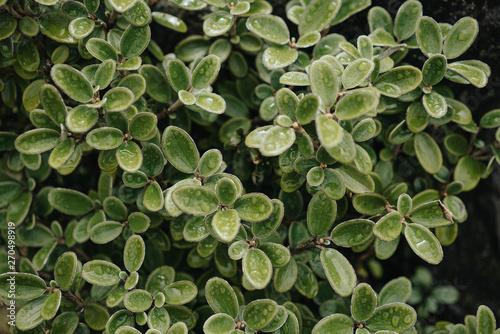 Photo  New Zealand Plants Tongariro 32
