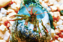 Small Funny Hermit Crab Underw...