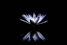 Water Lily: The Name Of The Ny...