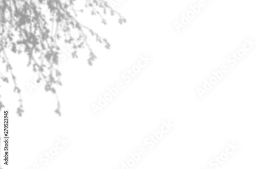 Fototapety, obrazy: Summer background of shadows branch leaves on a white wall. White and Black for overlaying a photo or mockup