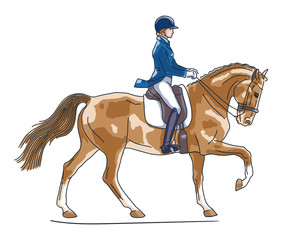 Equestrian, dressage. Vector illustration of a rider cantering on a horse.