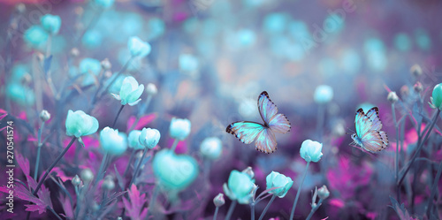 Wild light blue flowers in field and two fluttering butterfly on nature outdoors, close-up macro. Magic artistic image. Toned in blue and purple tones.
