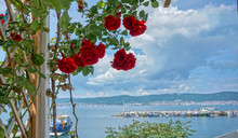 Roses Wit Sea View Panorama