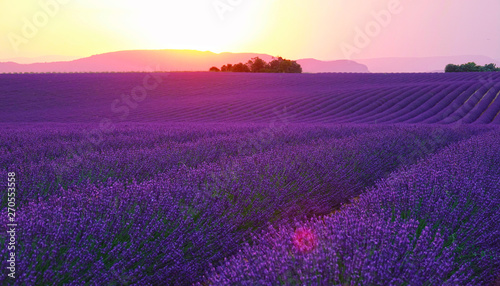 Foto auf AluDibond Violett LENS FLARE: Evening sun sets behind the hills and shines on fields of lavender.
