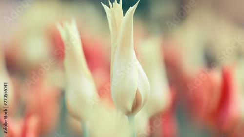 Recess Fitting Buddha Tulip