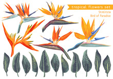 Vector Set Of Strelitzia Reginae, Tropical Flowers And Leaves. Vector, Isolated On White. Realistic Style, Hand Drawn. South African Plant, Called Crane Flower Or Bird Of Paradise.