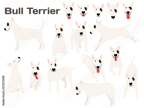 bull terrier,dog in action,happy dog Canvas Print
