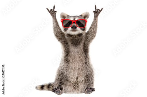 Papiers peints Magasin de musique Funny raccoon in red sunglasses showing a rock gesture isolated on white background