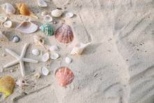 Summer Time Concept With Sea Shells And Starfish On The Beach Sand White Background. Free Space For Your Decoration Top View.