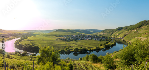 Fototapety, obrazy: wineyards in mosel valley