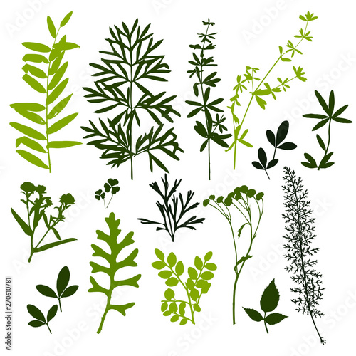 Fototapety, obrazy: Set of silhouettes of botanical elements. Branches with leaves, herbs, wild plants, trees. Garden and forest collection of leaves and grass. Vector illustration on white background - Vector Graphics