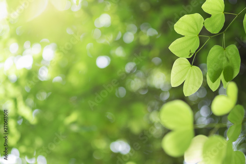 Foto auf Gartenposter Baume Closeup of nature green leaf and sunlight with greenery blurred background use as decoration ecology environment , fresh wallpaper concept. - Image