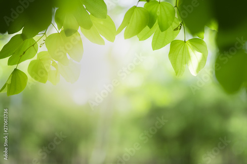 Closeup of nature green leaf and sunlight with greenery blurred background use as decoration ecology environment , fresh wallpaper concept Fotobehang