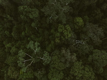 Treetops Of Green Lush Rainforest From Above