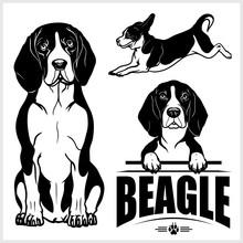 Beagle Dog - Vector Set Isolated Illustration On White Background