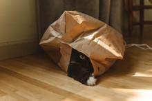 A Cat Hiding In A Bag