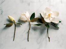 Three Magnolia Blooms