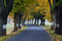 Czechia, Bohemia, Bohemian Switzerland, Country Road Lined With Maple Trees