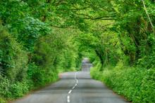United Kingdom, England, Cornwall, Rural Road Through Green Tunnel In Forest