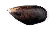 Fresh Mussel Isolated On White...