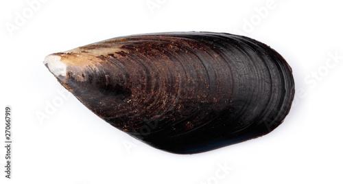 Canvastavla fresh mussel isolated on white background.