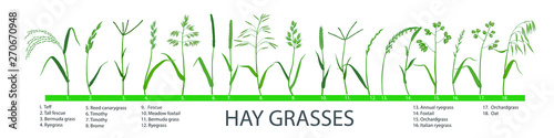 Carta da parati Big set of pasture and meadow hay and forage grasses, plants for cattle, horses, sheep, rabbits, birds