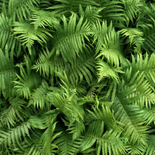 Green Fern Foliage In Summer