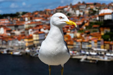 Seagull On The Background Of The City.