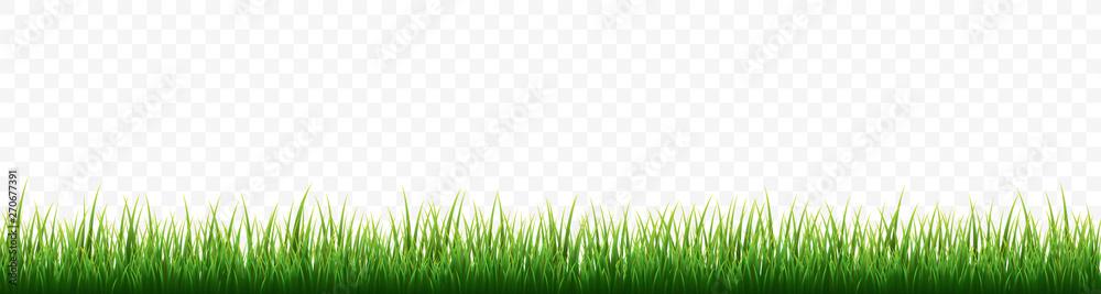 Fototapeta Green grass border set on white background. Vector Illustration
