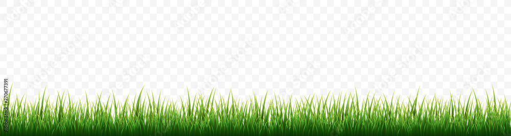 Fototapety, obrazy: Green grass border set on white background. Vector Illustration