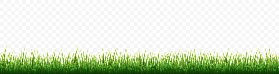 Green grass border set on white background. Vector Illustration