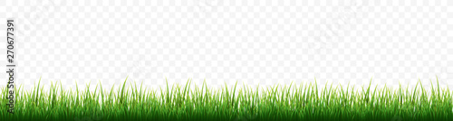 Green grass border set on white background. Vector Illustration Wallpaper Mural