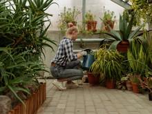 Woman Watering Flowerpots In Conservatory