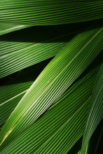Exotic And Lush Palm Leaf Deta...
