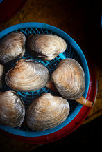 Large Live Clams For Sale In A Market