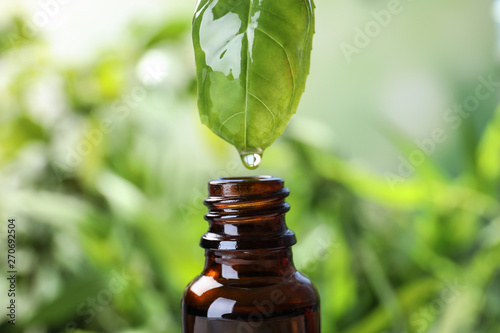 Essential oil dripping from basil leaf into glass bottle on blurred background, closeup