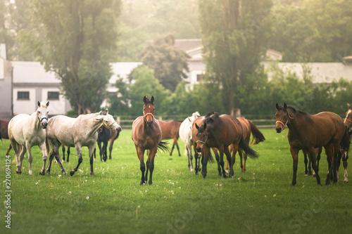 Fototapeta Konie na łące obraz