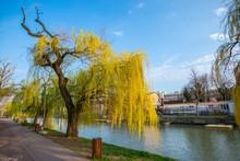 Springtime In Timisoara, Romania