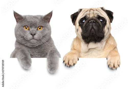 Cat and dog over white banner Canvas Print