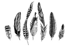 7 Hand Drawn Feathers On White Background
