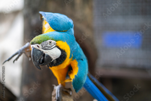 Parrot, bright color, close-up photography