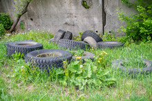Old Car Tires Lying Among Gree...